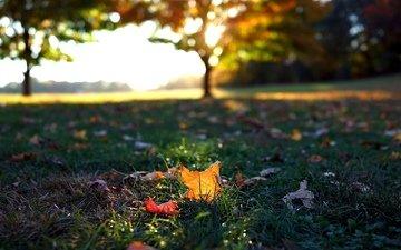 трава, листья, макро, осень, листочки, листопад, осен