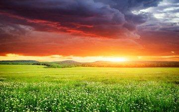 небо, цветы, трава, закат, поле, неба, ландшафт, на природе