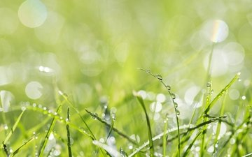 grass, nature, macro, rosa, drops, green