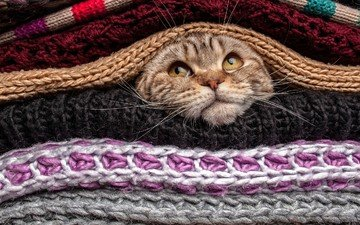 eyes, cat, mustache, wool, look, the situation, nose, head, cute, funny, sweaters