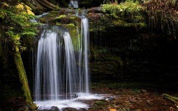 лес, ручей, водопад, мох