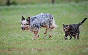 трава, кот, кошка, собака, луг, пара, пес, друганы