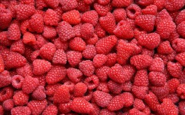 raspberry, red, berries, a lot