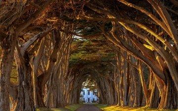деревья, станция, туннель, вокзал, деревь, дерево, reyes, marconi, кипарис, marconi cypress tunnel, michael brandt, калифорнийская