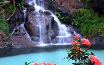 цветы, скалы, природа, зелень, водопад, красные, тропики