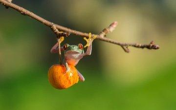 nature, macro, photo, branch, fruit, frog, greeting