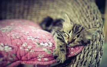 кошка, сон, котенок, дом, уют