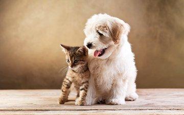 кот, котенок, собака, котёнка, болонка, cобака