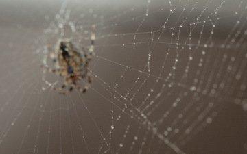 природа, макро, насекомое, паук, паутина, боке