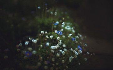 цветы, настроение, фон, полевые, боке, тёмно-зелёный, меланхолия, josé antonio