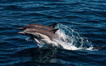 море, брызги, прыжок, пара, дельфины
