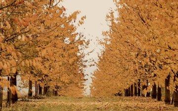деревья, природа, осень