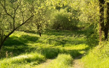 трава, деревья, солнце, зелень, лес, лето, путь, германия, бавария