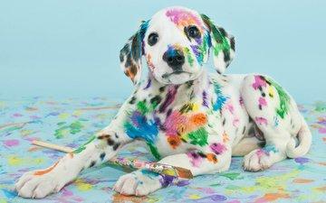 собака, краска, пятна, щенок, далматин, кисть
