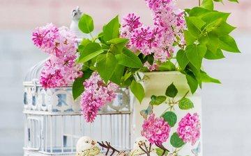 цветы, листья, клетка, сирень, натюрморт