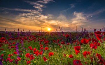 небо, цветы, трава, облака, солнце, природа, пейзаж, утро, поле, маки, равнина, вс, неба, цветы, болгария, sunshine, poppies