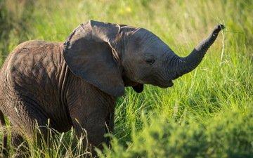 природа, фон, слон, слоненок