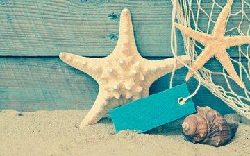 shore, sea, sand, beach, shell, starfish, seashells, summer