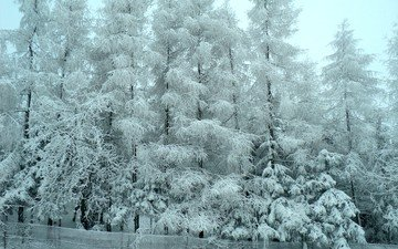 деревья, снег, лес, зима, мороз, деревь, изморозь