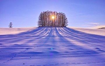 деревья, солнце, снег, зима, поле, день, тени, солнечные лучи