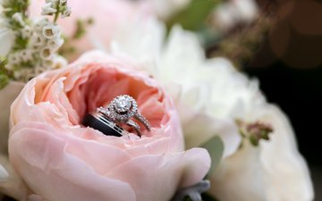 роза, лепестки, кольца