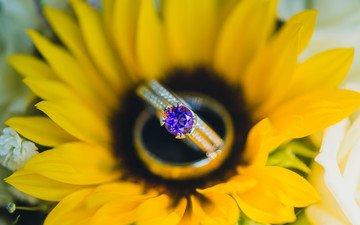 лепестки, подсолнух, камень, кольцо, желтые