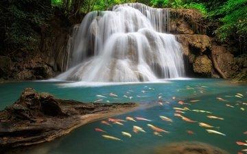 озеро, скалы, камни, лес, водопад, рыбы, таиланд, парчовый карп, patrick ;-)