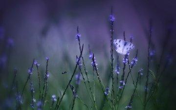цветы, трава, зелёный, макро, фон, поле, бабочка, фиолетовый, насекомые, размытость, сиреневые