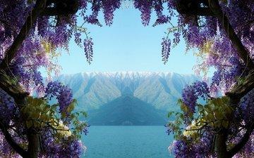 вода, озеро, горы, природа, цветение, италия, растение, глициния, вистерия, комо, mancunian61