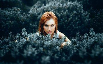 листья, девушка, кусты, взгляд, волосы, лицо, красивая девушка, рыжеволосая, ronny garcia