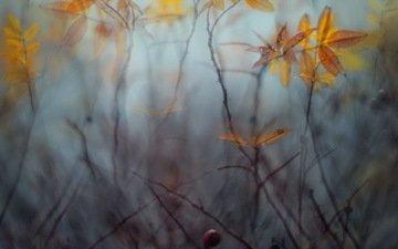 природа, листья, макро, ветки, осень