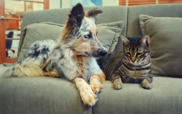 cat, dog, pair, sofa, friendship