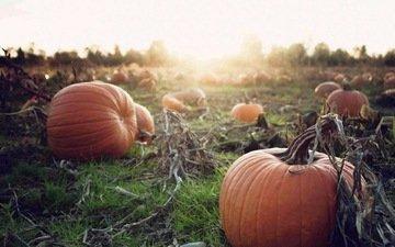 закат, осень, урожай, овощи, тыква, осен, pumpkins