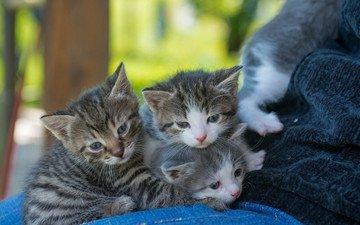 look, cats, kids, kittens