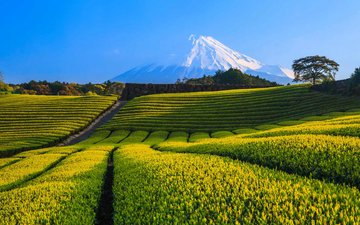 горы, снег, природа, пейзаж, гора, япония, фудзияма, чайная плантация, гора фудзи, чайные плантации