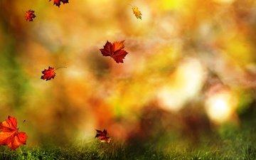 трава, листья, полет, осень, размытость, клен, листопад