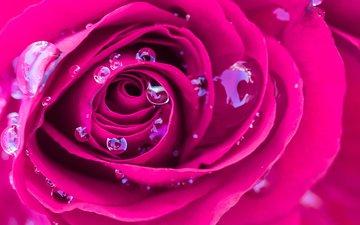 макро, роса, капли, роза, бутон, розовая, яркая
