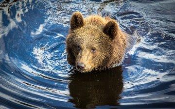 вода, река, медведь, мишка, охота, медвежонок