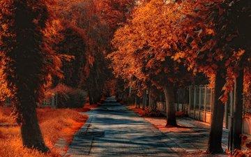 дорожка, осень, обработка, тропинка, улица, опадают, осен