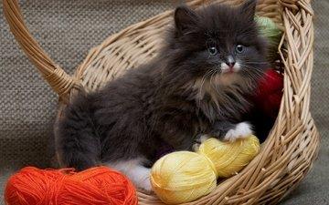 кошка, котенок, пушистый, корзина, нитки