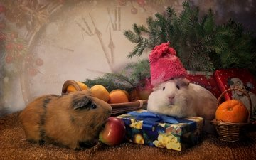 животные, подарки, часы, ель, игрушки, шапка, мандарины, морские свинки