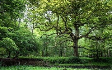 трава, деревья, дерево, лес, зелёный