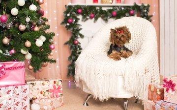 новый год, елка, кресло, праздник, бантик, йоркширский терьер
