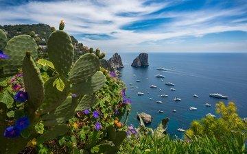 цветы, море, лето, яхты, италия, кактус, капри