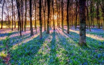 цветы, деревья, солнце, лес, лучи, тень, колокольчики
