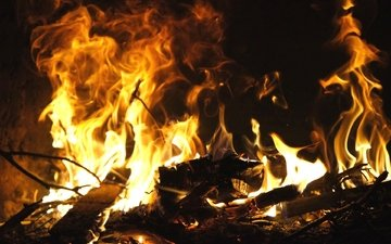 flame, branches, fire, the fire