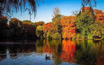 деревья, озеро, осень, утки, индия, осен