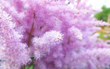 цветы, лето, растение, цветком, летнее, необычное растение
