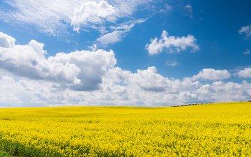 небо, облака, желтый, поле, лето, голубой, рапс