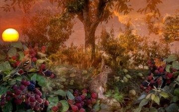 солнце, дерево, лес, закат, птица, заяц, ежевика